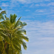 Green palm trees against a blue sky — Stock Photo