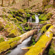 Moss on logs in a mountain stream — Stock Photo
