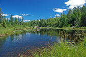 Marsh in the Quetico — Stock Photo