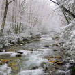 Spring snow in smokies — Stock Photo #7170404
