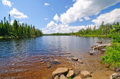 Summertime in the North Woods — Stock Photo