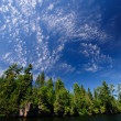 High clouds in North Woods — Stock Photo #7297407