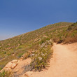 Stock Photo: Trail on desert mountain