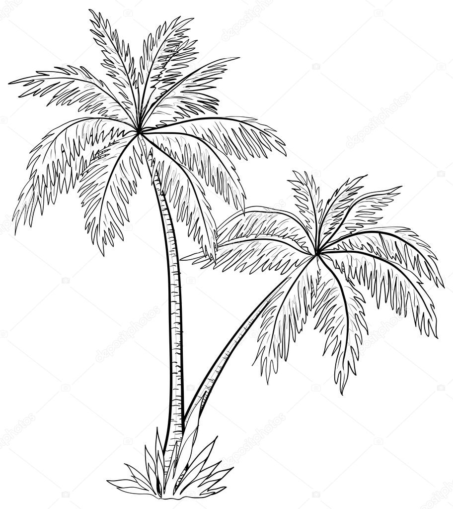Vector, palm trees with leaves, monochrome contours on white background — Stock Vector #6822497