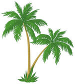 Palm trees — Stock Photo