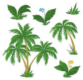 Palm trees, flowers and grass — Stock Vector