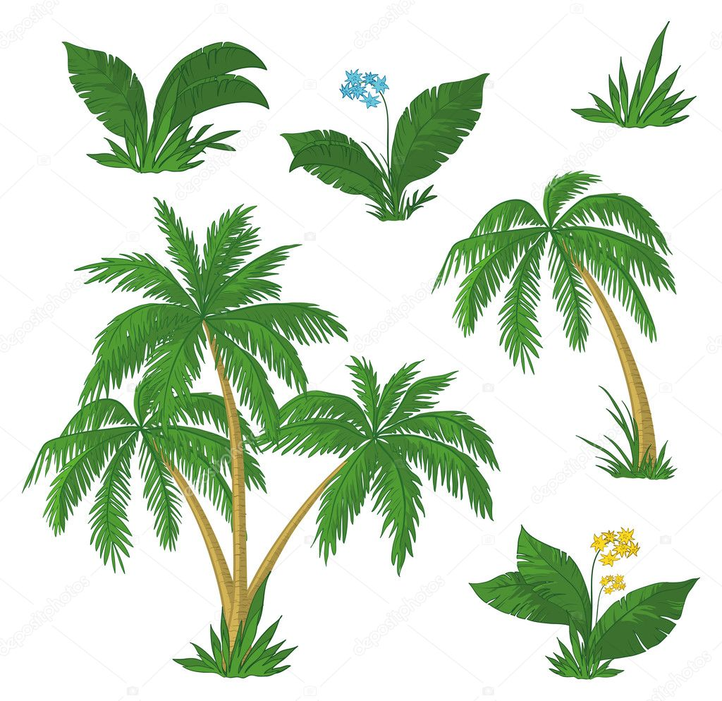 Palm trees, flowers and green grass on white background. Vector — Stock Vector #7273528