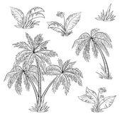 Palma, árvores, flores e grama, contornos — Vetorial Stock