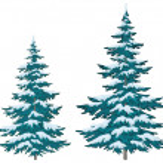 Christmas trees under snow — Stock Photo