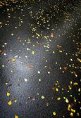 Asfalto molhado com amarelo brilhante outonal deixa — Fotografia Stock