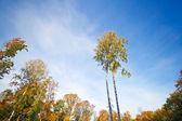 осенние деревья на опушке леса — Стоковое фото