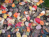 Autumnal leaves natural background — Stock Photo