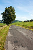 Road and landscape — Stock Photo