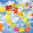 Stock Photo: Fall leaves