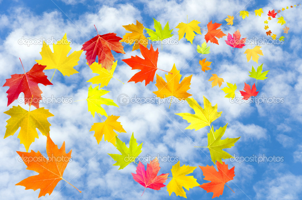 Autumn leafs on the sky background — Stock Photo #6920754