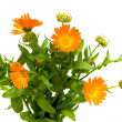 Bouquet of flowers of calendula closeup - Stock Photo