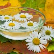Chamomile flowers in water and maple leaves — Stok fotoğraf