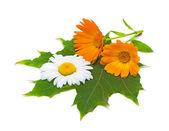 Flores de caléndula y margaritas en una hoja de arce — Foto de Stock