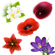 Set Of Realistic Flowers - Stock Vector