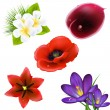 Set Of Realistic Flowers - Image vectorielle