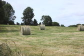 Rural landscape, bales of hay in a field in spring — Stock Photo