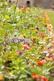 Jardim de belas flores de todas as cores — Foto Stock