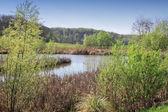 芦苇和树木包围的小湖 — 图库照片