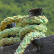 Stock Photo: Rope for mooring boat to pier