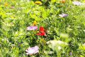 Färgglada blommor, selektiv fokus på rosa blomma — Stockfoto