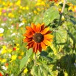 Colorful flowers, selective focus on sunflower orange - Stock Photo