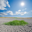 Stock Photo: Sun over drought land