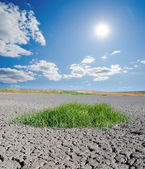 Sun over drought land — Stock Photo