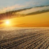 закат над черное поле — Стоковое фото