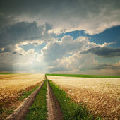 Road in golden agricultural field under dramatic clouds — Stock Photo