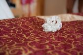 Garter on bed — Stock Photo