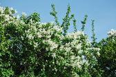 Primavera e verão florescendo — Foto Stock