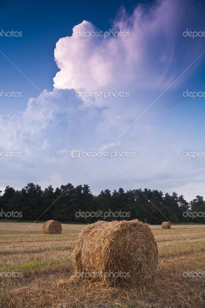 Beautiful clouds and field with three stacks at sunset — Stock Photo #7808912