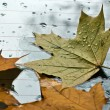 The fallen down autumn leaves — Stock Photo