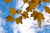 Autumn motives. — Stock Photo
