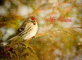 ビンテージ スタイルのクリスマス カード. — ストック写真