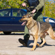 Drug sniffing dog with officer. — Stock Photo