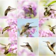 Hummingbird collage. - Stock Photo