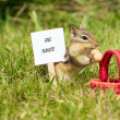 Chipmunk with a peanut and sign. — Stockfoto