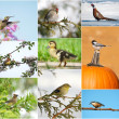 Royalty-Free Stock Photo: Birds throughout different seasons collage.