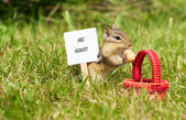 Chipmunk with a peanut and sign. — Stok fotoğraf