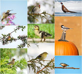 Birds throughout different seasons collage. — Stock Photo