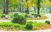 Lawn in the park in autumn — Stock Photo