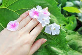 Hand, flower and leaf — Stock Photo