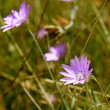Purple wildflowers — Stock Photo
