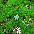 green moss backgound — Stock Photo